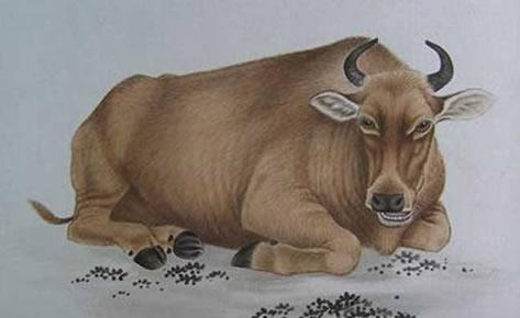 乙未年--属牛